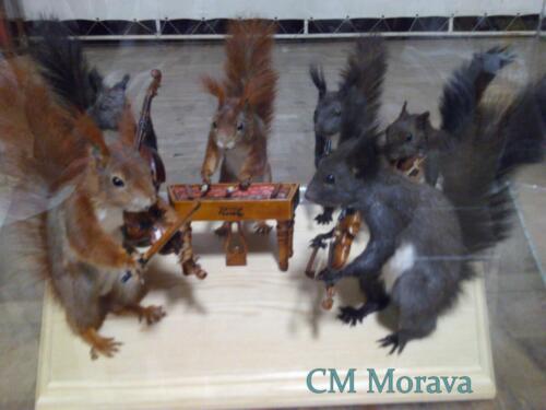 Morava za veverky